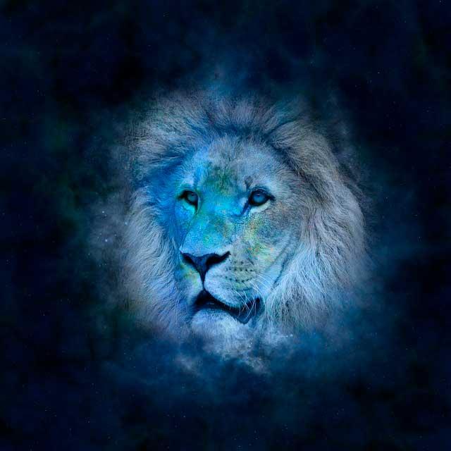 conquistar uma leonina