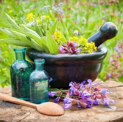 significado de fitoterapia