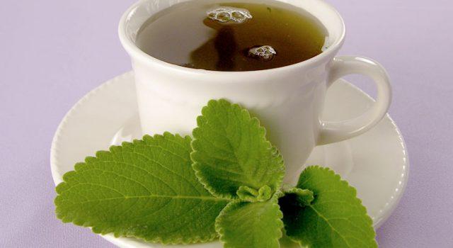 chá de boldo para que serve